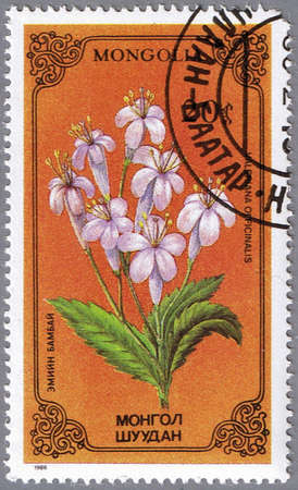 philatelic: MONGOLIA - CIRCA 1986: A stamp printed in Mongolia shows Valeriana officinalis or common valerian, series devoted to flowers, circa 1986