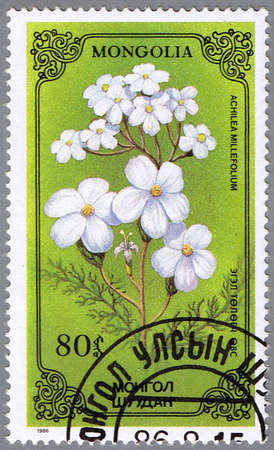 yarrow: MONGOLIA - CIRCA 1986: A stamp printed in Mongolia shows Achilea millefolium or thousand-leaf, series devoted to flowers, circa 1986