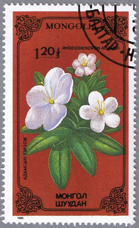 philatelic: MONGOLIA - CIRCA 1986: A stamp printed in Mongolia shows Rhododendron adamsii, series devoted to flowers, circa 1986 Stock Photo