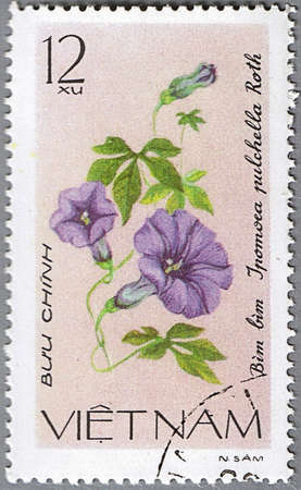 VIETNAM - CIRCA 1980: A stamp printed in Vietnam shows Ipomoea  pulchella, series is devoted to flowers, circa 1980 photo