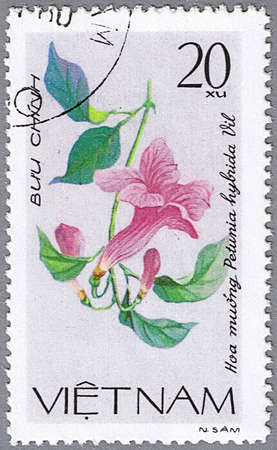 philatelic: VIETNAM - CIRCA 1980: A stamp printed in Vietnam shows Petunia hybrida, series is devoted to flowers, circa 1980