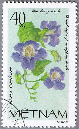 philatelic: VIETNAM - CIRCA 1980: A stamp printed in Vietnam shows Thunbergia grandiflora, series is devoted to flowers, circa 1980 Stock Photo