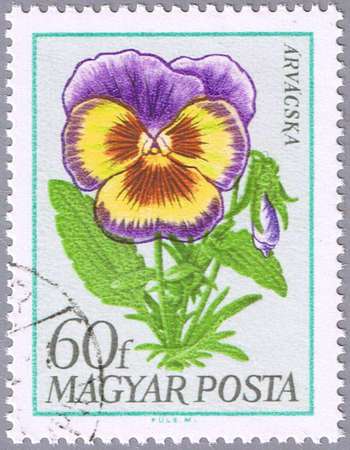 HUNGARY - CIRCA 1968: A stamp printed in Hungary shows pansy, series, circa 1968 photo