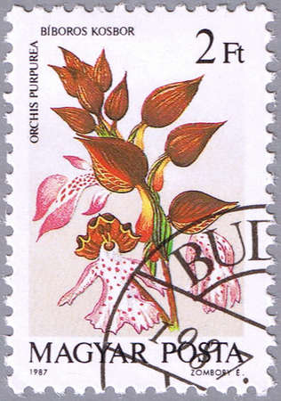 HUNGARY - CIRCA 1987: A stamp printed in Hungary shows Orchis purpurea or Lady orchid, series is devoted to orchids, circa 1987 photo