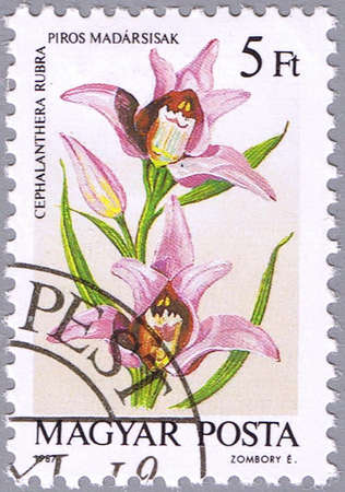 HUNGARY - CIRCA 1987: A stamp printed in Hungary shows Cephalanthera rubra or Red Helleborine, series is devoted to orchids, circa 1987