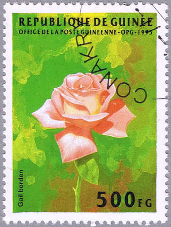 borden: GUINEA - CIRCA 1995: A stamp printed in Guinea shows Gail Borden rose, series is devoted to flowers, circa 1995