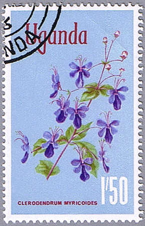 UGANDA - CIRCA 1969: A stamp printed in Uganda shows Clerodendrum myricoides or blue butterfly bush, series is devoted to flowers, circa 1969 photo
