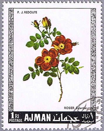 ajman: AJMAN - CIRCA 1969: A stamp printed in Ajman shows briar, series is devoted to roses, circa 1969