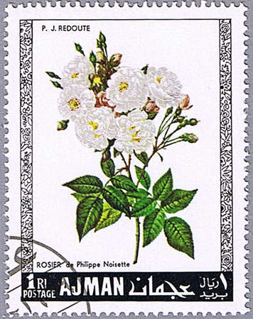 ajman: AJMAN - CIRCA 1969: A stamp printed in Ajman shows Philippe Noisette rose, series is devoted to roses, circa 1969