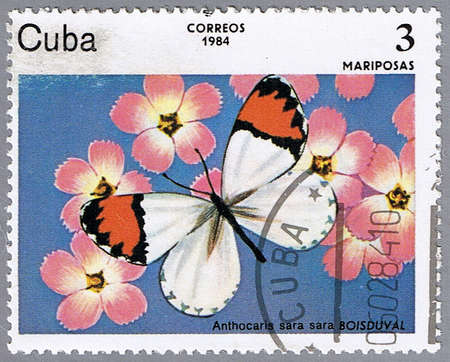 CUBA - CIRCA 1984: A stamp printed in Cuba shows Anthocaris sara, series, circa 1984 photo