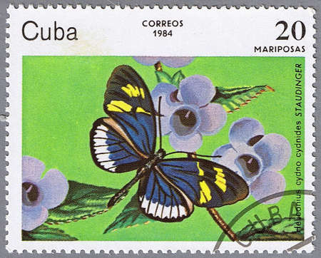 CUBA - CIRCA 1984: A stamp printed in Cuba shows Heliconius cydno cydnides, series, circa 1984 photo