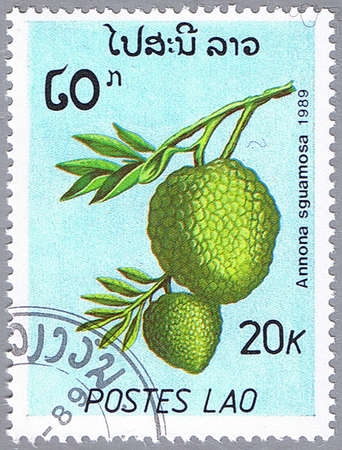LAOS - CIRCA 1989: A stamp printed in Laos shows Annona sguamosa or sugar-apple, series, circa 1989