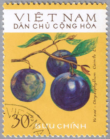 VIETNAM - CIRCA 1975: A stamp printed in Vietnam shows Chrysophyllum cainito or star apple, series, circa 1975