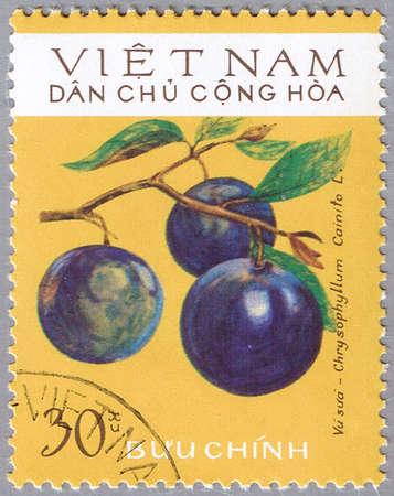 VIETNAM - CIRCA 1975: A stamp printed in Vietnam shows Chrysophyllum cainito or star apple, series, circa 1975