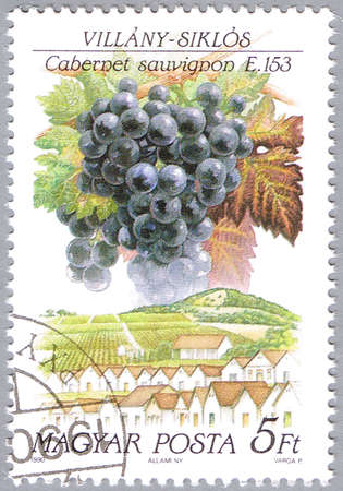 cabernet sauvignon: HUNGARY - CIRCA 1990: A stamp printed in Hungary shows Cabernet sauvignon, series is devoted to grapes, circa 1990 Editorial