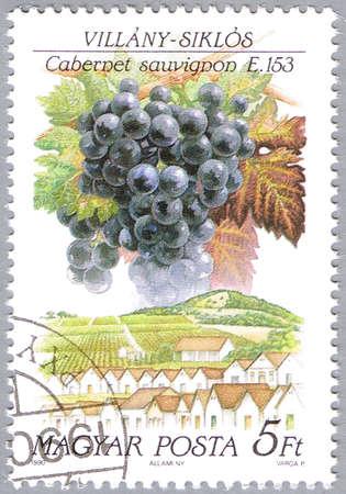 cabernet: Hungr�a - CIRCA 1990: Un sello impreso en Hungr�a muestra Cabernet Sauvignon, la serie est� dedicada a las uvas, alrededor de 1990