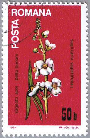 ROMANIA - CIRCA 1984: A stamp printed in Romania shows Sagittaria sagittifolia or arrowhead, series, circa 1984 Stock Photo - 12256309