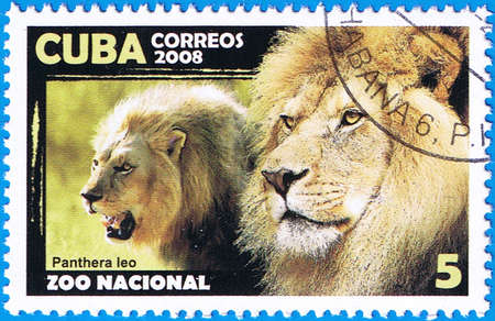 CUBA - CIRCA 2008: A stamp printed in Cuba shows Panthera leo or lion, series, circa 2008