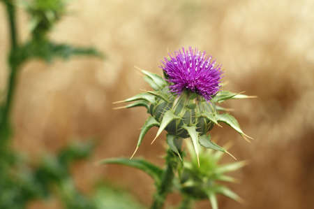Spiked weed