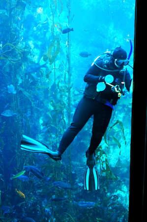 Diver in Aquarium Stock Photo