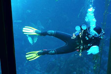 Aquarium Cleaning Diver
