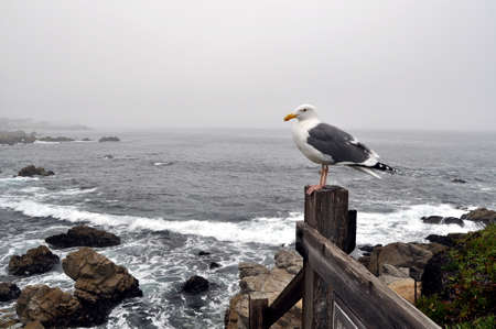 Ocean view with seagull Stock Photo