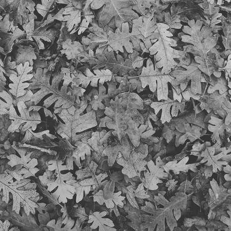 Oak leaves on ground