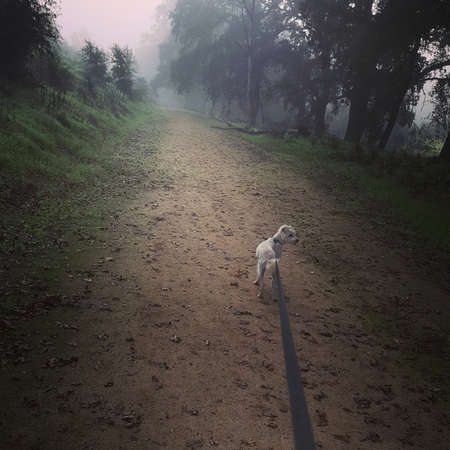 Dog being walked on a leash down a dirt trail through a forest area, from the point of view of the dog walker.