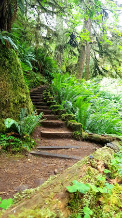 Hikers walking trail