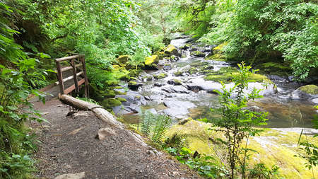 Hiking trail along stream