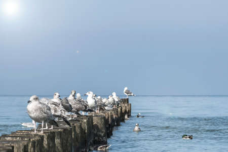 Seagulls in the sea