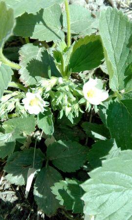 flower Stock Photo - 82047178