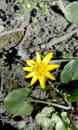 flower Stock Photo - 82395072
