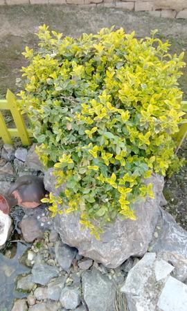 pot plant Stock Photo