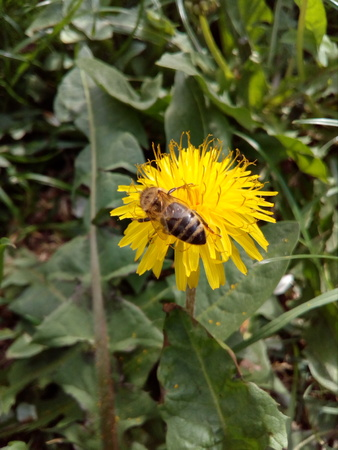 Bee on the flower, start a new life
