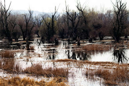 late fall: dark swamp in late fall, note shallow depth of field