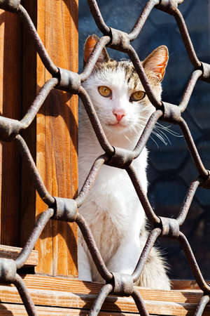 Closeup of a cat sitting behind iron fence waiting