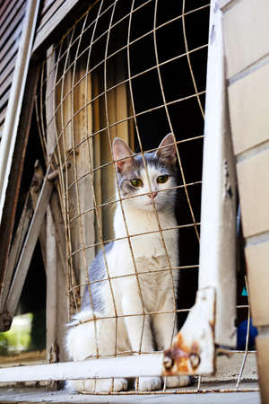 Sad cat on windowsill covered with wire fence Stock Photo