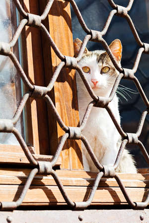 trapped: Cat sitting behind iron fence waiting Stock Photo