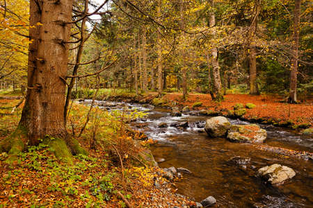 Small creek in autumn forest Stock Photo