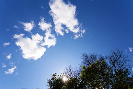 Vista de la copa de un árbol y un cielo azul claro con pequeñas nubes blancas Foto de archivo - 93531017