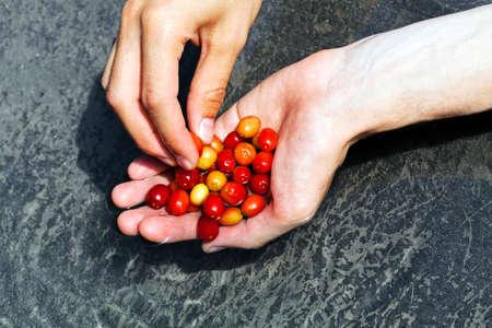 の手に赤と黄色の葉、被写界深度の浅いメモ