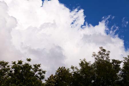 深い青空に対する白い雲と木の頂上の一部