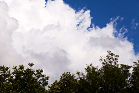White cloud and part of treetop against deep blue sky Imagens