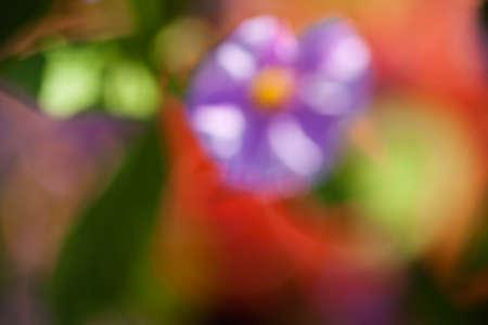 ぼやけた背景のために、フィールド内の抽象的な紫色の花
