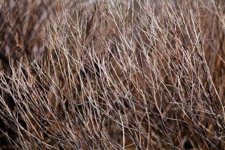 秋または春の草、フィールドの浅い深さに注意してください