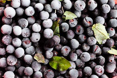 Ripe and juicy freshly picked blueberries Standard-Bild