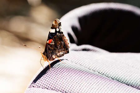 butterfly red admiral on canvas, note shallow depth of field