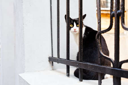 Cat sitting on iron fence waiting