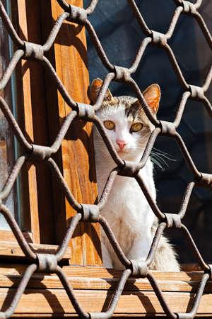 Cat sitting behind iron fence waiting Stock Photo